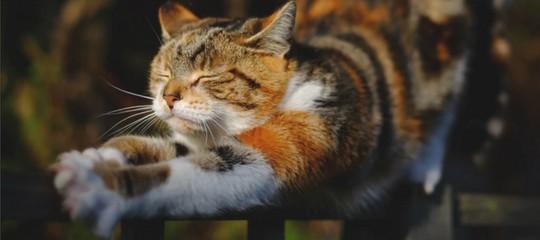 Jeux pour petits chatons et enfants zen